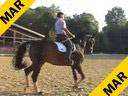 Klaus Balkenhol<br>Assisting<br> Various Riders<br>Schooling Session<br> Duration: 22 minutes