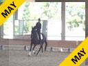 Volker Brommann<br> Assisting<br> Michelle Dodge<br> Evangeline<br> 7 yrs. Old Mare<br> Friesian Heritage Horse<br> by: Bente D<br> Training: 2nd Level<br> Duration: 28 minutes
