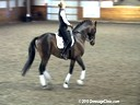 SFMWNY Maplewood Warmbloods<br> Monica Theodorescu<br> Assisting<br> Elizabeth Niemi<br> Amore<br> KWPN<br> 11 yrs. old Stallion<br> Trainig: 3rd/4th Level<br> Owner: Niemi Dressage<br> Duration: 35 minutes