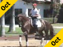 Guenter Seidel<br>Riding and Lecturing<br>French Prince<br>Wurttemberg Gelding<br>7 yr. old by French Kiss<br>Training: 3rd Level<br>Duration: 40 minutes
