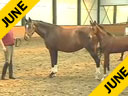 Penny& Johann RockxLecturing & PresentationTopics Discussed & ShownBreeding Points, Foals, MaresConformation Topics Discussed alsoBreeding Programs Discussed etc.Duration: 25 minutes