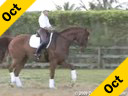 Betsy Steiner<br>Riding & Lecturing<br>Fino<br>by: Rhinelander<br>9 yrs. old Gelding<br>Training: 4th Level<br>Owner: Joli Burrell Duration: 27 minutes