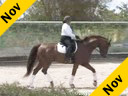 Betsy Steiner<br>Assisting<br>Becky Lamas<br>Procco<br>Hanoverian<br>7 yr. old Gelding<br>Training: 2nd Level<br>Duration: 36 minutes