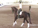 USDF Trainers Conference<br> Day 1<br> Steffen Peters<br> Riding & Lecturing &<br> Assisting<br> Heidi Degele<br> Don Fredo HD Oldenburg<br> 6 yrs. old Gelding<br> by: Don Frederico<br> Duration: 44 minutes