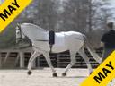 Bo Jena<br>Assisting<br>Betsy Steiner<br>Sentimiento<br>8 yr. old PRE Stallion<br>Owner: Tamara Gerber<br>Training: Intermediaire 2<br>Duration: 42 minutes