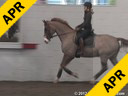 Day 2<br> Jan Brink<br> Assisting<br> Jeremy Steinberg<br> Thomas<br> KWPN<br> by: Metal<br> 10 yrs. old Gelding<br> Training: PSG<br> Owner: Sandi Fortun<br> Duration: 40 minutes