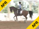 Sabine Schut-Kery<br> Assisting<br> Tobi Coate<br> Zorren Ten X<br> 12 yrs. old<br> Training:<br> Duration: 40 minutes