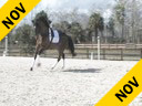 Kathy Connelly<br> Assisting<br> Liz Austin<br> Olivier<br> KWPN<br> 16 yrs. old Stallion<br> Training: GP<br> Owner: Madeleine Austin<br> Duration: 20 minutes