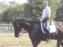 USDF APPROVED<br> University Accreditation<br> Steffen Peters<br> Riding & Lecturing<br> Laszlo<br>KWPN<br>12 yrs. old Gelding<br> Duration 31 Minutes