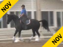 Kathy Connelly<br> Assisting<br> Michelle Gerlach<br> Udjang<br> 14 yrs. Old  Gelding<br> KWPN<br> Training: GP<br> by: Polanski<br> Owner:  Michelle Gerlach Duration: 28 minutes