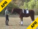 Jan Ebeling<br> Riding & Lecturing<br> Don Gio<br> 4 yr. old Oldenburg<br> Training: Newly Broke Training Level 1<br> Duration: 20 minutes