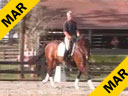 USDF APPROVED<br>University Accreditation<br>Available on DVD No.13<br>Day 1<br> George Williams<br> Riding & Lecturing<br> Favore<br> Westfalen Gelding<br> 7 yrs. old<br> Training: Second Level<br> Duration: 36 minutes