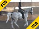 Markus Gribbe Assisting Tania Seymour Fidertanz Rheinlander by: Fidemark 1 9 yrs. old Stallion Training: PSG Owner: Bockmann Pherde Duration: 15 minutes