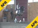 Sharon McCusker<br> Riding & Lecturing<br> Wrigley<br> KWPN<br> by: Son de Niro<br> 9 yrs. old Gelding<br> Training: GP<br> Owner: Sharon McCusker<br> Duration: 37 minutes