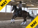 Hans Biss<br> Assisting<br> Rebecca Wesatzke<br> G-Sharp<br> Hanovarian<br> by: GraffTop<br> 9 yrs. old Gelding<br> Training: PSG Level<br> Owner: Rebecca Wesatzke<br> Duration: 31 minutes
