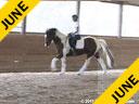 Hans Biss<br> Assisting<br> Siri Bezdicek<br> Quigley<br> Irish Sport Horse<br> 10 yrs. old Gelding<br> Training: Training Level<br> Owner: Ellen Ruckert<br> Duration: 41 minutes