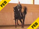 Nathalie Wittgenstein<br>Riding & Lecturing<br>MasterMind<br>Danish Warmblood<br>7 yrs. old<br>Training: Intermediaire 1/2<br>Duration: 38 minutes