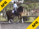 Kathy Connelly<br> Assisting<br> Jamie Kment<br> Chivalry<br> Holsteiner<br> 12 yrs. old Gelding<br> Training: PSG/Grand Prix<br> Owner: Elaine Vandeventer<br> Duration: 22 minutes