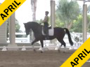 IDCTA Illinois Dressage & Combined Training Association<br> George Williams<br> Assisting<br> Amanda Johnson<br> Pluto VI<br> 14 yrs. Old  Lipizzan Stallion<br> Andorella<br> Training: GP<br> Duration: 38 minutes