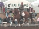 NEDA Fall Symposium<br>Day 3<br>Available on DVD No.4<br>Hubertus Schmidt<br> Assisting<br> Sharon McCusker<br> Julie Sherif<br> 13 yrs. old<br> Danish Gelding<br> Owner: Sharon McCusker<br> Training: Grand Prix<br> Duration: 40 minutes