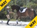 Bill Warren<br> Work in Hand<br> River Run Roscoe<br> Holsteiner<br> 13 yrs. old Gelding<br> Training: GP Level<br> Owner: Beverly Dudley<br> Duration: 22 minutes