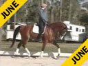 Available on DVD No.18Shannon Dueck Riding & Lecturing Control Owner: Evan Lindsay Swedish Warmblood 9 yrs. old Gelding Training: 3rd/4th Level Duration: 38 minutes