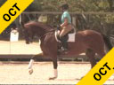 Kathy Connelly<br> Assisting<br> Jami Kment<br> Zonia<br> Dutch WB<br> KWPN<br> 10 yrs. Old Mare<br>  Training: GP<br> Owner: Jami Kment<br> Duration: 32 minutes