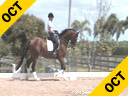 Kathy Connelly<br> Assisting<br> Dr.Laine Hills<br> Ukarde<br> by:Biotop<br> 7 yrs. old Gelding<br> Training:3rd/4th Level<br> Duration: 25 minutes