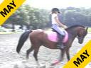 Lendon Gray Assisting Rachael Chowanec Hakuna Matata Welsh/TB Cross 7 yrs. old Gelding FEI Pony TrainingL 2nd Level Duration: 60 minutes