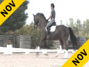 Kathy Connelly<br> Assisting<br> Ryan Yap<br> Roy<br> Hanoverian<br> by:Rubinstein<br> 10 yrs. old Gelding<br> Training:PSG<br> Owner: Ryan Yap<br> Duration: 28 minutes