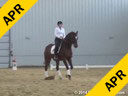 Day 2<br> Jan Brink<br> Assisting<br> Amy Lewis<br> Sir Steierman<br> 5 yrs. Old Hanoverian<br> Competed 4&5 yrs. Old Championships<br> Duration: 36 minutes