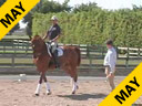 Availble on DVD No.24<br>Hubertus Schmidt<br>Assisting<br>Oded Shimoni<br>Valentino<br>11 yrs. old Gelding<br>Owned by: Katherine von Ertfelda<br>Training:Grand Prix<br>Duration: 50 minutes