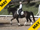 Mette Rosencrantz<br>Riding & Lecturing<br>Rockafeller<br>Swedish Warmblood<br>7 yrs. old<br>Training: 3rd Level<br>Duration: 33 minutes
