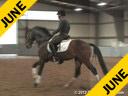 Anne Gribbons<br> Assisting<br> Lesley Eden<br> Let's Dance<br> German Sport<br> By: Laurentio<br> 5 yrs. old Gelding<br> Training: Young Horse Program<br> Owner: Anne Gribbons<br> Duration: 45 minutes