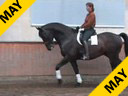 Penny Rockx<br>Riding and Lecturing<br>Sambucca<br>KWPN<br>9 yrs. old Gelding<br>by: Contango/Ferro<br>Training: Grand Prix<br>Duration: 46 minutes