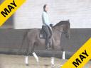 Michael Klimke<br> Riding &amp; Lecturing<br> Fleshman<br> by: Florestan<br> 9 yrs. old Gelding<br> Owner:<br>Manuela Klimke<br> Training: 1-1 Level<br> Duration: 27 minutes