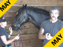 Sal Salvetti<br> & Jane Hannigan<br> Introductory Discussion<br> on Massage Therapy<br> for Dressage Horses<br> Part 1 of Three Parts<br> Duration: 36 minutes