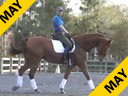 Volker Brommann<br>Riding and Lecturing<br>Upper Class<br>8 yrs. old KWPN Gelding<br>Training: 2nd/3rd Level<br>Duration: 33 minutes