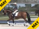 Bill Warren<br> Riding &amp; Lecturing<br> Romantic<br>Oldenburg<br> 12 yrs. old<br> Training: Intermediaire-2<br> Duration: 38 minutes
