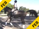 Betsy Steiner<br> Assisting<br> Pat Borders<br> Fiddledeedee<br> 6 yrs. Old<br>  American Saddlebred<br> Duration: 41 minutes