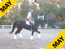 Available on DVD No.4<br>Jan Ebeling<br> Riding & Lecturing<br> Feliciano<br> 9 yrs. old Stallion<br> Training: GP Level<br> Duration: 45 minutes