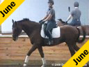 Lendon Gray<br>Assisting<br>Alison Cavey<br>Renaldo<br>8 yrs.old Danish Gelding<br>Owner: AndreaWoodner<br>Training: 1st Level<br>Duration:40 minutes