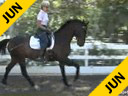 Mette Rosencrantz<br>Riding & Lecturing<br>Da Bu<br>Hanoverian Gelding<br>5 yrs. old<br>Training Level<br>Duration: 35 minutes