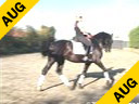 Leunis Van Lieren<br> Assisting<br> Jessica Nipjes<br> Utah<br> by: Metall<br> KWPN<br> 5 yrs. old Stallion<br> Training: 2nd Level<br> Duration: 16 minutes