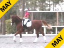 Betsy Steiner<br> Riding & Lecturing<br> Diamore<br> Danish Warmblood<br> 9 yrs. old<br>  Training: PSG 1-1 Level<br> Duration: 32 minutes