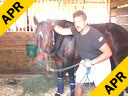Sal Salvetti<br>Massage Therapy<br>For Dressage Horses<br>Westfalen<br>12 yrs. old Mare<br>Training: PSG<br>Duration:35 minutes