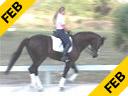 Hubertus Schmidt<br> Assisting<br> Heidi Degele<br> Everybody Darling<br> Westfalen<br> 12 yrs. old Gelding<br> Training: Grand Prix<br> Duration: 31 minutes