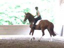 Cesar Parra<br> Assisting<br> Heather Hornor<br> Fortuna<br> 13 yrs. Old Dutch Warmblood<br> Training: PSG Level<br> Duration: 44 minutes