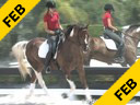 Betsy Steiner<br> Riding & Lecturing<br> Conego<br> Lusitane/Interagro<br> 5 yrs. old Stallion<br> Training: Training Level<br> Owner: Steiner Dressage<br> Duration: 37 minutes