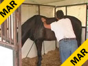 Available on DVD No.15Sal Salvetti Techniques of Massage Therapy For Dressage Horses KWPN 9yrs, old  Training:PSG Duration:45 minutes